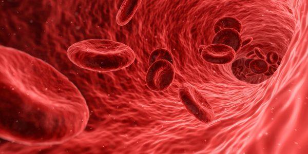 Blut - Untersuchung